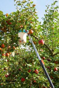 Česač ovoce, zdroj: Gardena